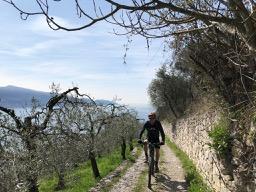 Oliven über Gargnano