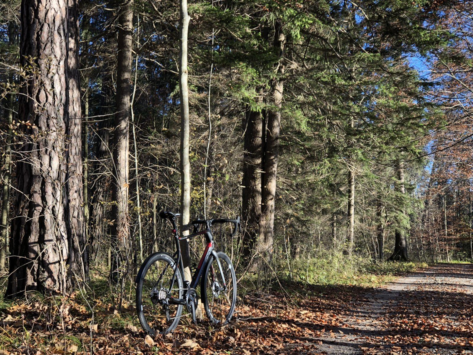 Im Haunstetter Wald